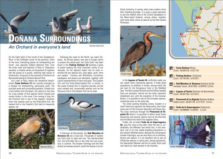 Ornithological Tourism Guide Doñana Surroundings